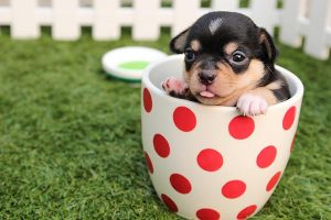 A puppy in a cup
