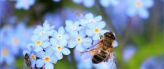 What does it mean to dream about bees