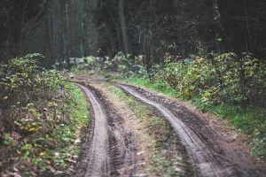 Muddy forest track road