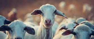 What does it mean to dream about goats