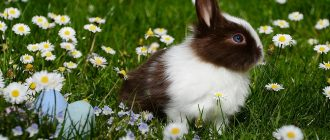 What does it mean to dream about rabbits