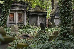 An old cemetery covered in ivy