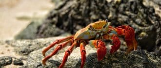 What does it mean to dream about crabs