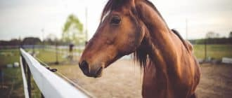 What does it mean to dream about horses