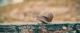 What does it mean to dream about snails