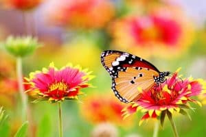 Butterfly on a blooming flower