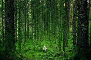 Ghost in a mystical green forest