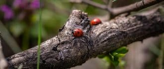 What does it mean to dream about beetles