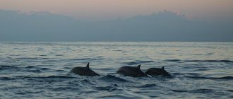 What does it mean to dream about dolphins