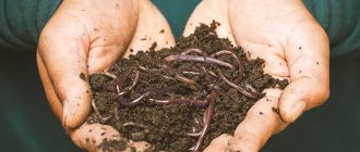 What does it mean to dream about worms