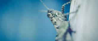 What does it mean to dream of crickets