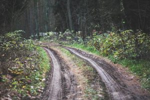 A muddy forest road