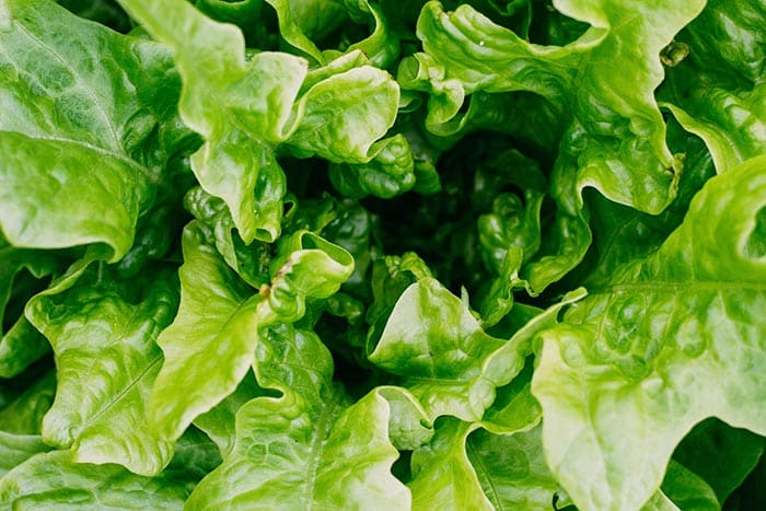 What does it mean to dream of lettuce