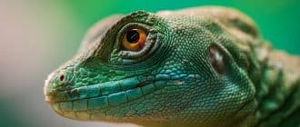 What does it mean to dream of lizards