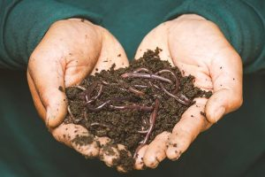 Earthworms in the mud