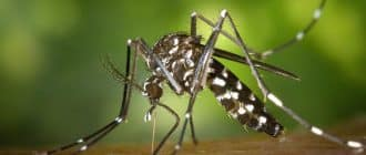 What does it mean to dream about mosquitoes
