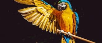 What does it mean to dream of parrots