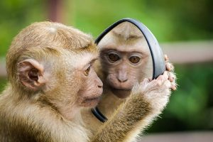 Monkey looking at its own reflection in a mirror