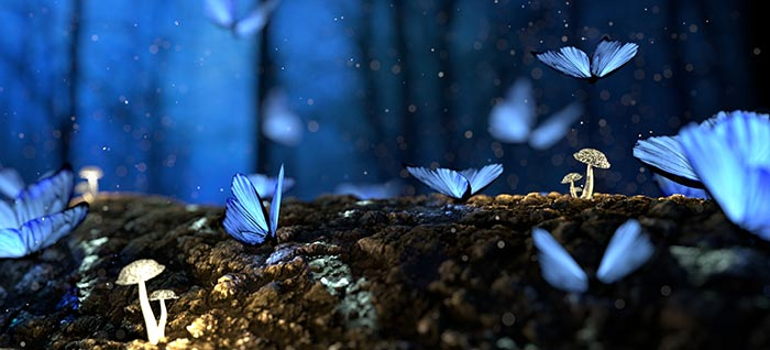 What does it mean to dream about butterflies