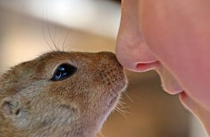 Hamster and a human touching noses